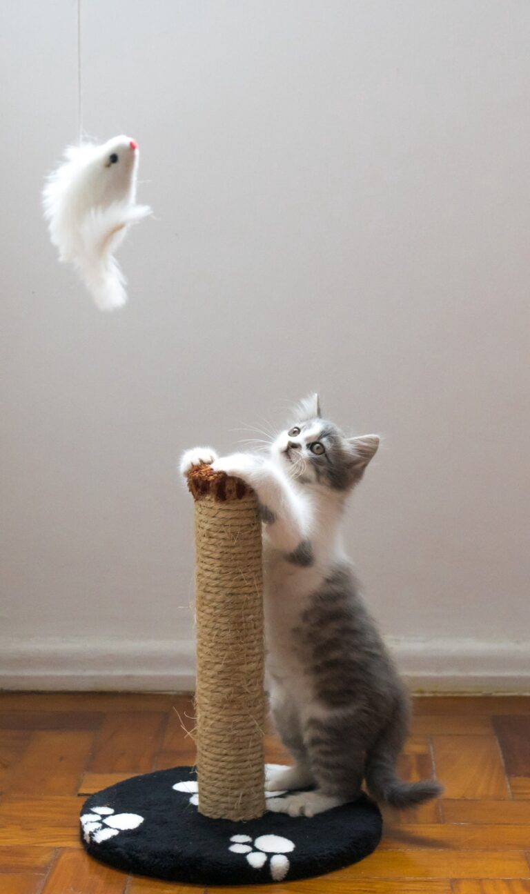 Resumen del libro: Jay Heinrichs «Cómo discutir con un gato»