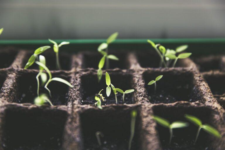 ¿Por qué muchas startups están reconsiderando el papel de la investigación a medida que crecen?